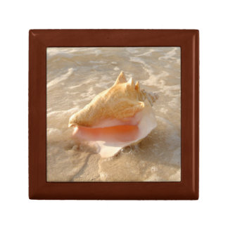 Conch Shell In Sand On Tropical Beach Small Square Gift Box