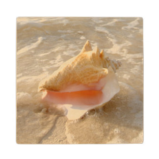 Conch Shell In Sand On Tropical Beach Wood Coaster