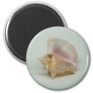 CONCH SHELL magnet (round)