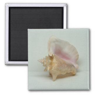 CONCH SHELL magnet (square)