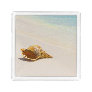 Conch Shell On Beach 3 Acrylic Tray