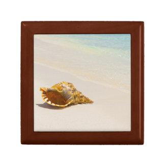 Conch Shell On Beach 3 Gift Box