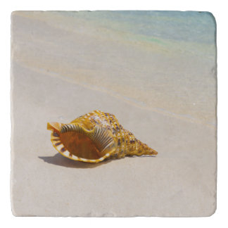 Conch Shell On Beach 3 Trivets