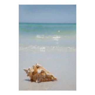 Conch Shell On Beach | Florida, St. Petersburg Poster