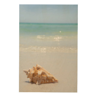 Conch Shell On Beach | Florida, St. Petersburg Wood Wall Art