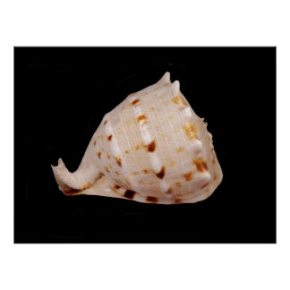 Conch Shell Poster