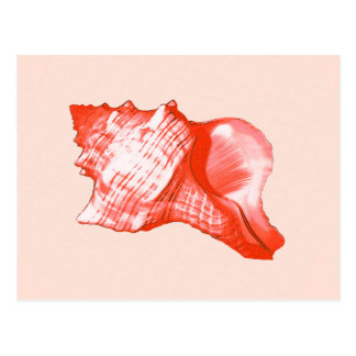Conch shell sketch - coral, shell pink and white postcard