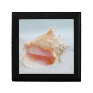 Conch Shell Small Square Gift Box
