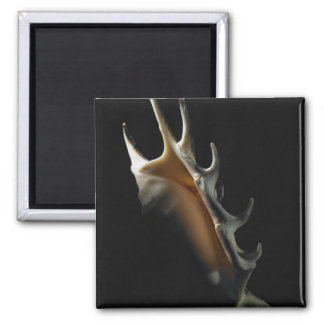 Conch shell square magnet