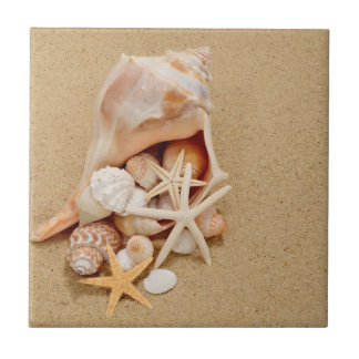 Conch Shell with Shells and Starfish Tile