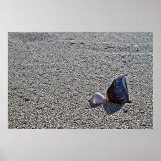 Conchas na praia posters