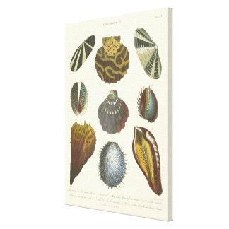 Conchology Collection Canvas Print