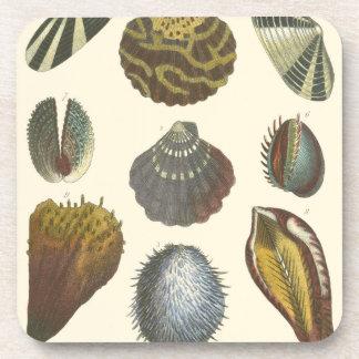 Conchology Collection Coaster