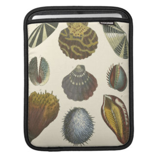 Conchology Collection iPad Sleeve
