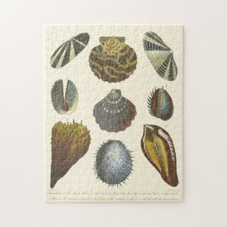 Conchology Collection Jigsaw Puzzle