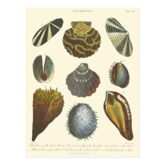 Conchology Collection Postcard