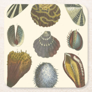 Conchology Collection Square Paper Coaster