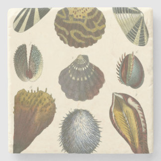 Conchology Collection Stone Coaster