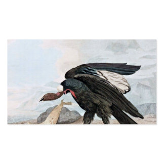 Condor Bird and Seal Vintage Art Pack Of Standard Business Cards