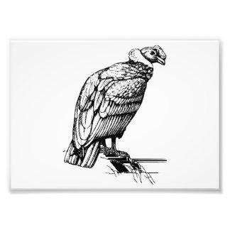 Condor Photo Art