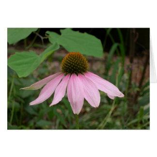 Cone Flower Card
