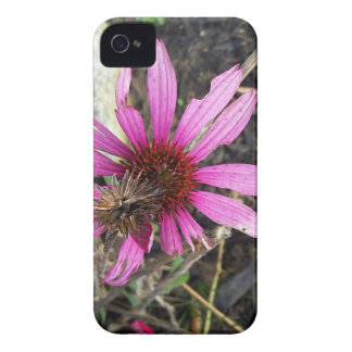 Cone Flower in the Fall iPhone 4 Case