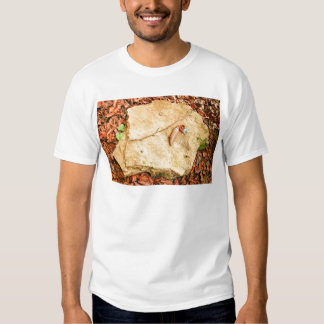 CONE ON STONE AMONG LEAVES TEE SHIRTS