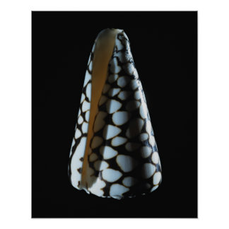 Cone shell 2 poster