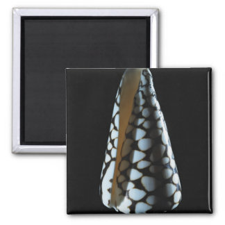 Cone shell 2 square magnet