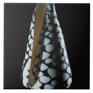 Cone shell 2 tile
