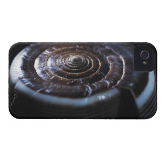 Cone shell Case-Mate iPhone 4 case