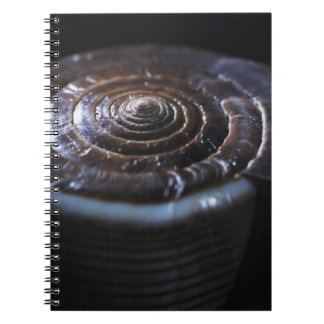 Cone shell notebook