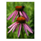 Coneflower and Bee Postcard