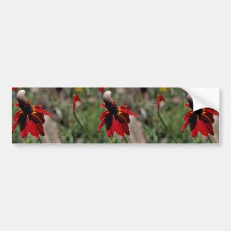 Coneflower Bumper Sticker