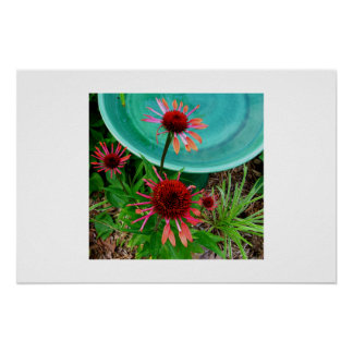 Coneflower by birdbath poster