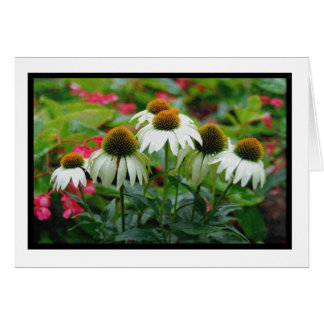 Coneflower Notecard Stationery Note Card