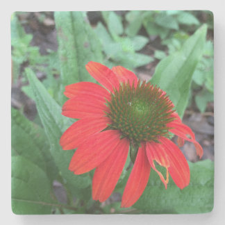 Coneflower Stone Coaster