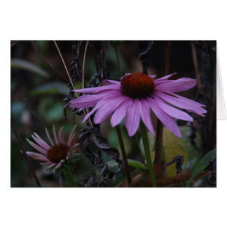 CONEFLOWERS IN FALL CARD