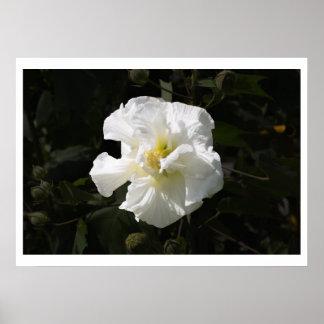 Confederate Rose Print