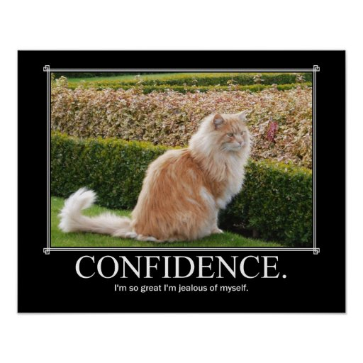 Confidence Cat Artwork Funny Poster