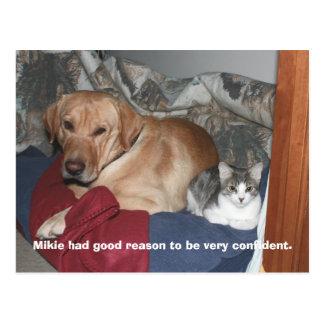 Confidence Postcards