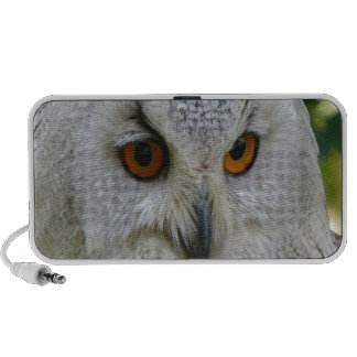 Confident Owl Travelling Speakers