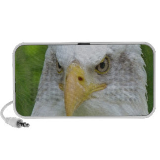 Confident peaceful bald eagle laptop speakers