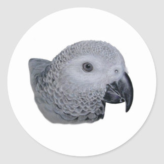 Congo African Grey parrot Classic Round Sticker