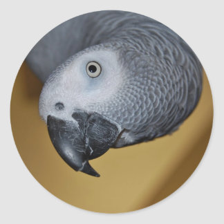 Congo African Grey Parrot Hello Classic Round Sticker