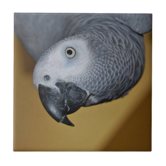 Congo African Grey Parrot Hello Small Square Tile