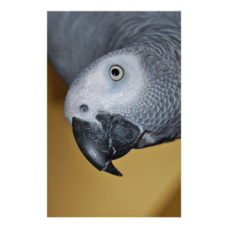 Congo African Grey Parrot Hello Stationery