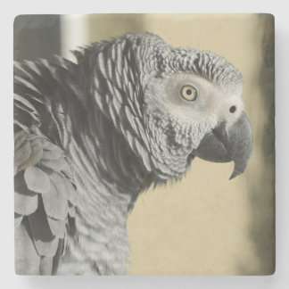 Congo African Grey Parrot with Ruffled Feathers Stone Coaster