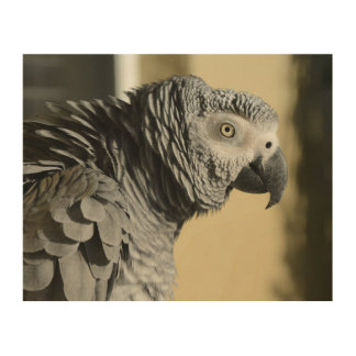 Congo African Grey Parrot with Ruffled Feathers Wood Print
