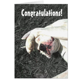 Congratulations Boxer Dog greeting card